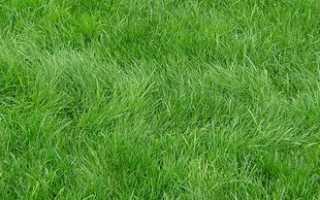 Лучшее время для посадки газона: когда лучше сажать траву, осенью или весной