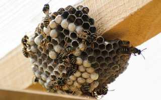 Как можно избавиться от ос в деревянном доме, если гнездо недоступно, как вывести