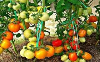Как сажать помидоры по 2 в одну лунку, правила высадки куста томатов по два в лунке