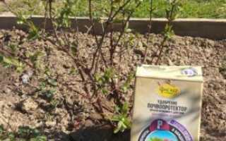 Подкормка жимолости ранней весной: уход и секреты хорошего урожая