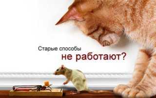 Об отпугивателях грызунов: крыс и мышей, ультразвуковых, электромагнитных