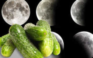 О посадке огурцов по лунному календарю и народным приметам: календарь