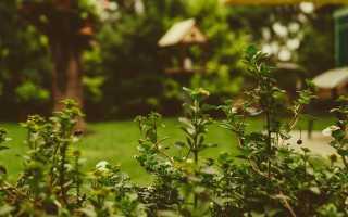 О борьбе с кротами на дачном участке: народные средства и рецепты