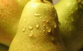 О груше Лесная красавица: описание и характеристики сорта, посадка, уход