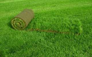 Как уложить рулонный газон: пошаговое руководство, проблемы и как их решить