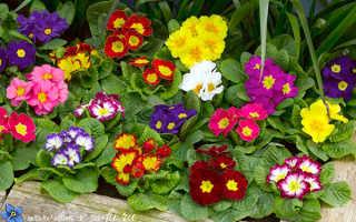 Многолетники: о растениях для тенистых мест в саду, любящих тень и полутень