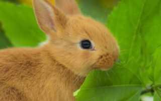 Какую ветку можно давать кролику: каких деревьев ветки едят, веточный корм