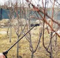 Все об опрыскивании плодовых деревьев и кустарников весной: чем обрабатывать