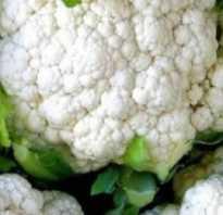О видах и сортах капусты: названия разновидностей цветных сортов, характеристики
