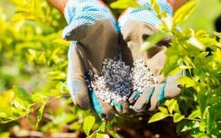 Фосфорные удобрения для томатов: виды и названия, в чем содержится фосфор