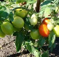 Валентина: описание сорта томата, характеристики помидоров, посев