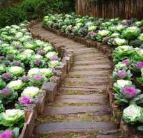 Оформление красивого газона с цветами своими руками: как обустроить на даче