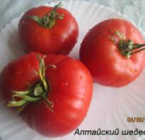 Алтайский шедевр: описание сорта томата, характеристики помидоров, посев