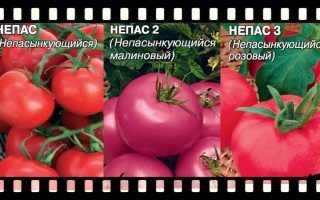 Непасынкующиеся: описание сортов томата, характеристики помидоров, посев