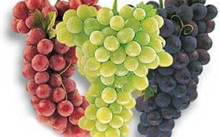 Виноград на Дальнем востоке: посадка, уход, выбираем сорта для Приморья