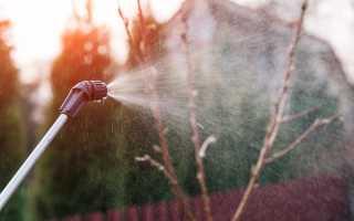 Все о вредителях плодовых деревьев: средства для борьбы и профилактики