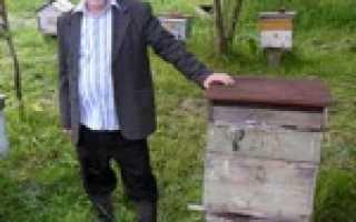 Об объединении пчелосемей: объединение пчелиных семей осенью, в августе