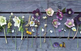 О сортах чайных трав: что это такое, описание, какие растения используются
