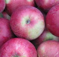 О яблоне Алеся: описание и характеристики сорта, уход и выращивание