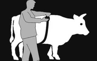 Как узнать вес быка без весов (таблица измерения КРС, лента обмера)