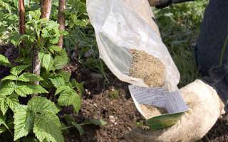 Чем обработать малину весной от болезней и вредителей: опрыскивание, полив