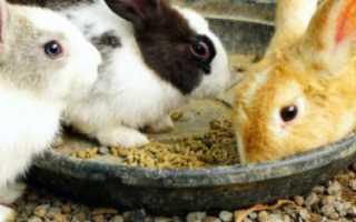 Когда отсаживают крольчонка от крольчихи: в каком возрасте и чем их кормить