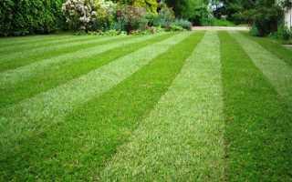 О посеве газонной травы своими руками: как засеять, уход и выращивание