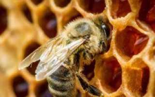 Почему пчела не запечатывает мед хотя рамка полная и что с ним делать
