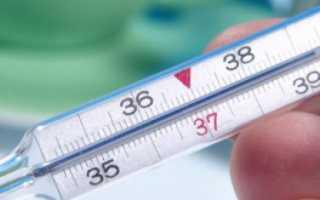 Все о корове: средний вес, температура тела, строение, интересные факты