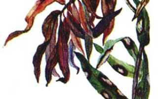 Как защитить лилии от вредителей (что делать, чем обработать, опрыскать)