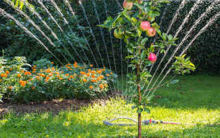 О поливе сада: как часто поливать плодовые деревья и кусты ягод летом