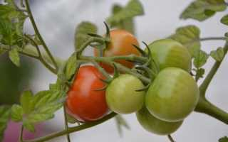 Как выбрать благоприятный день для пересадки помидор по лунному календарю