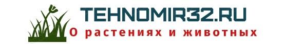 Tehnomir32.ru